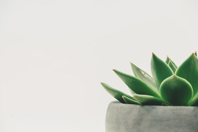 観葉植物を室内で育てる人に朗報!虫がつかない育て方を教えます