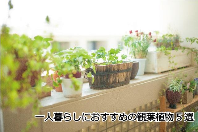 一人暮らしにおすすめの観葉植物