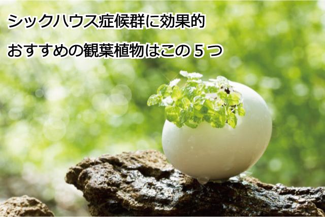 シックハウス症候群に効果的な観葉植物