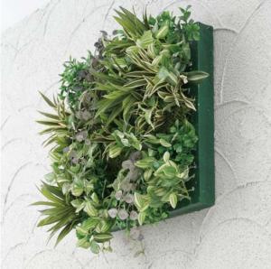 壁に飾る大きな観葉植物