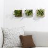 ソファの上の壁に飾る観葉植物