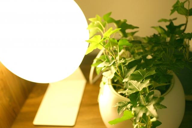 寝室の照明と観葉植物