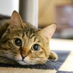 猫のインテリアのポイント