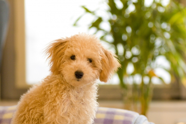 犬と暮らすインテリアのポイント