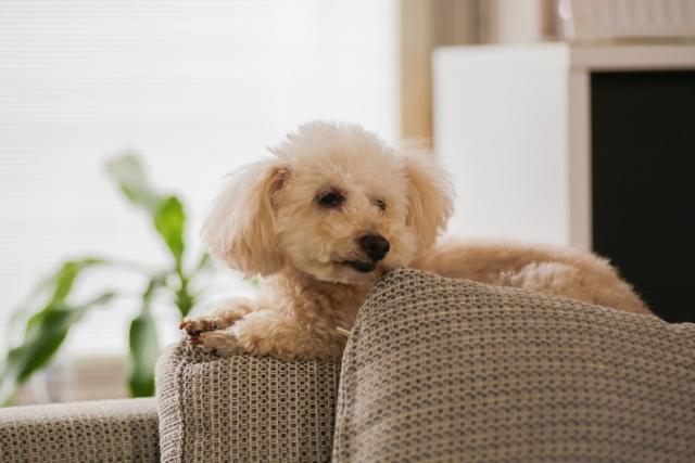 リビングの犬のインテリア