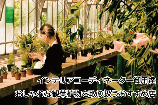 おしゃれな観葉植物が買える通販サイト