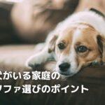 室内犬を飼育している家のソファ選びのポイント