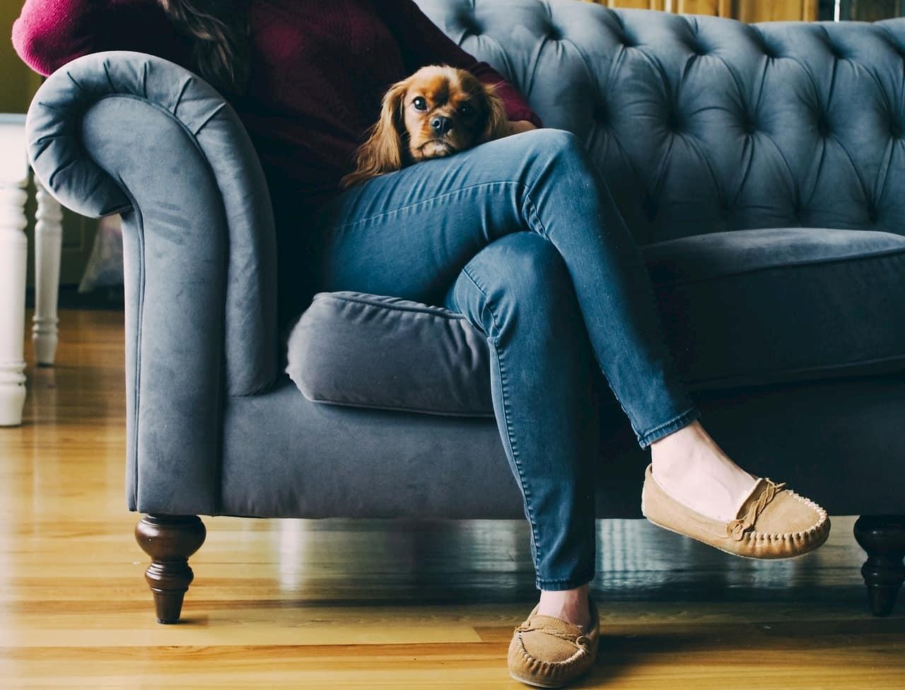 ソファに座る飼い主のひざの上でくつろぐ犬