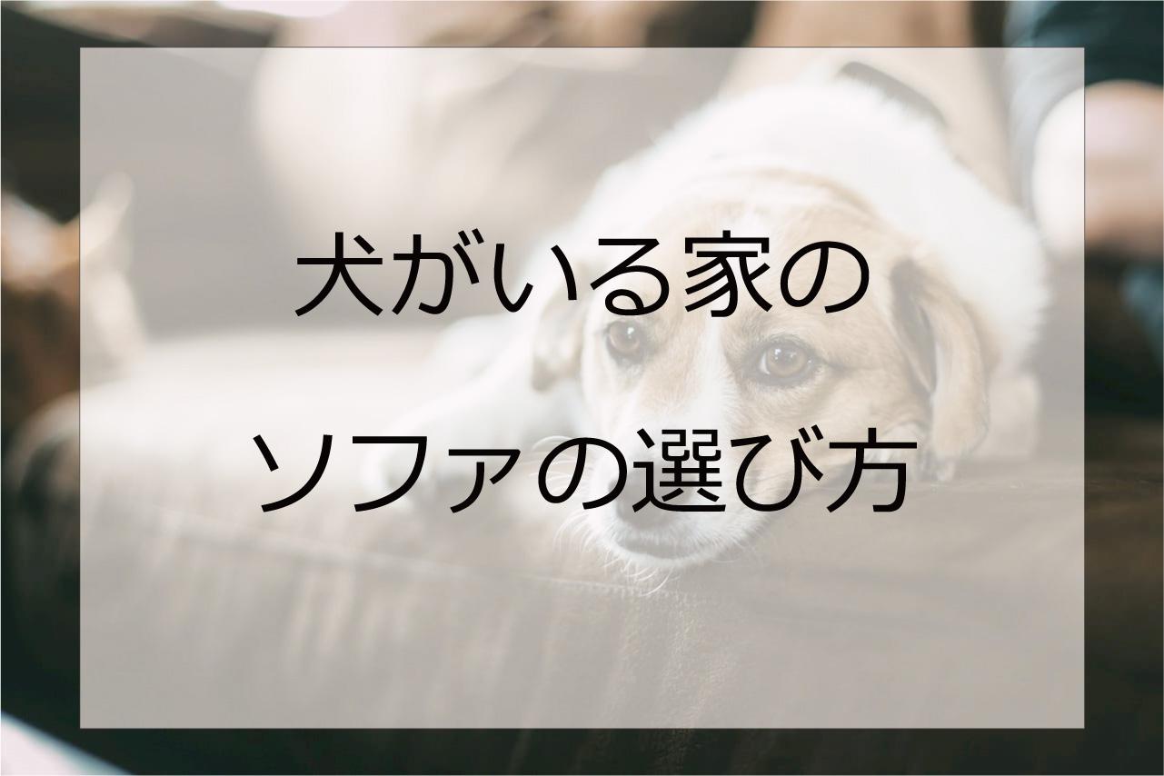 室内犬を飼育している家庭のソファの選びのポイント