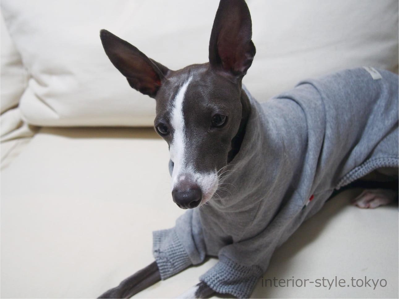 服を着てソファの上に座る犬