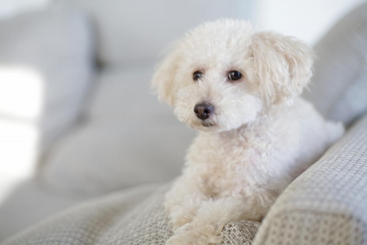 布地のソファやラグに絡まった犬の抜け毛をキレイに取り除く方法