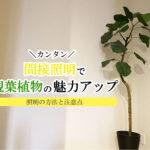 大型の観葉植物を間接照明でおしゃれにライトアップ