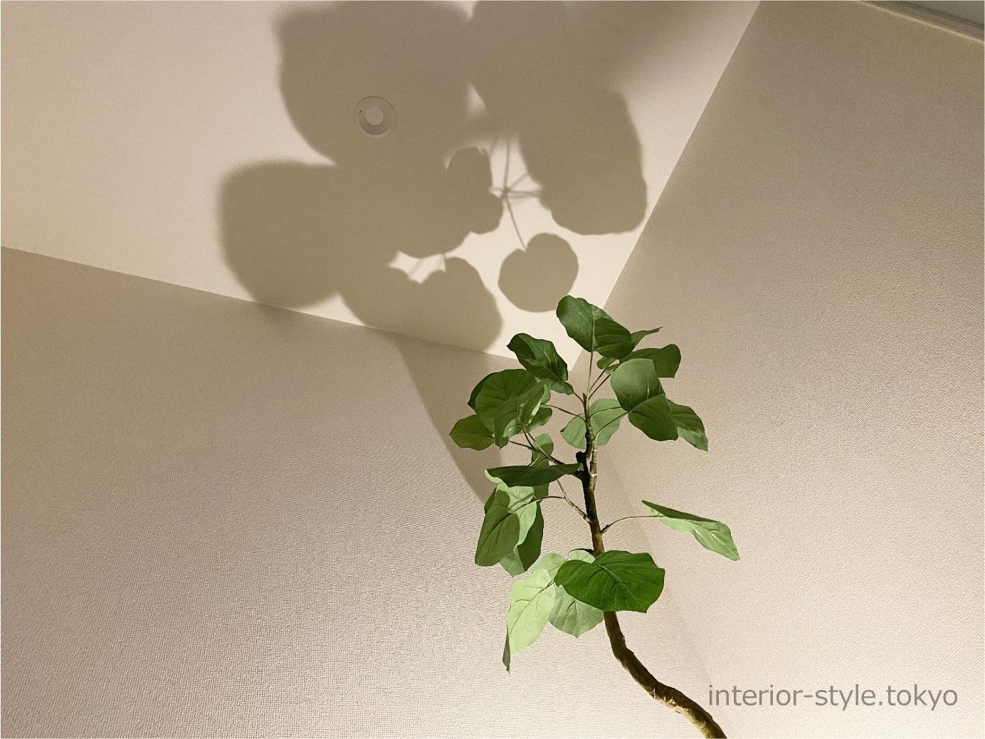 観葉植物をライトアップして天井に葉の影がうつる様子