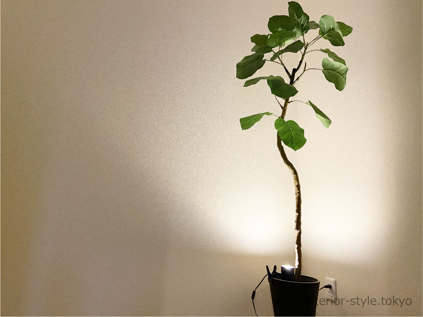 間接照明でライトアップされた観葉植物